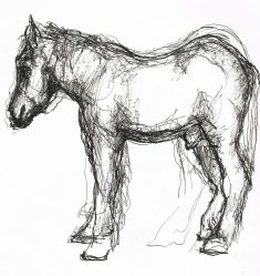 Horse Profile Sketch